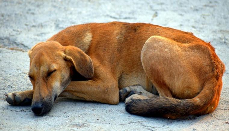Holanda primer país libre de perros callejeros