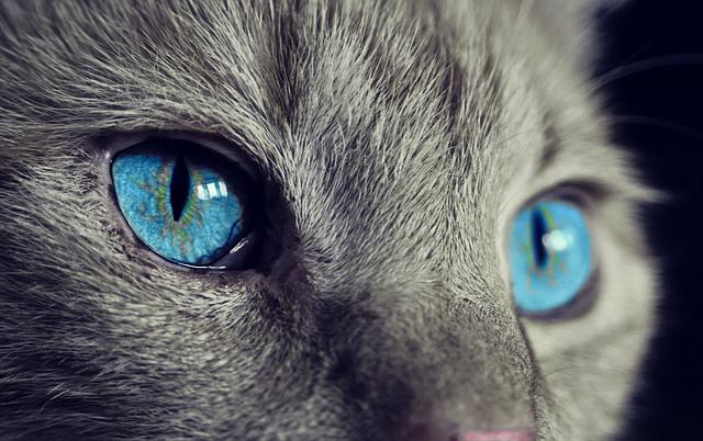 Tipos de Mascotas ¿Cuál te conviene?