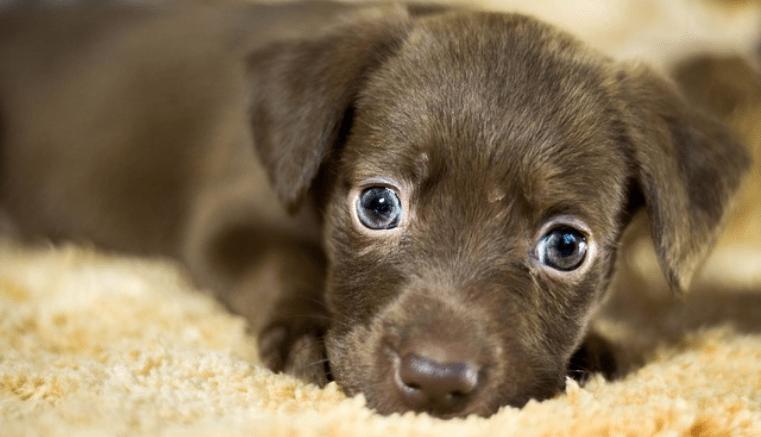 Adopta un perro sin hogar