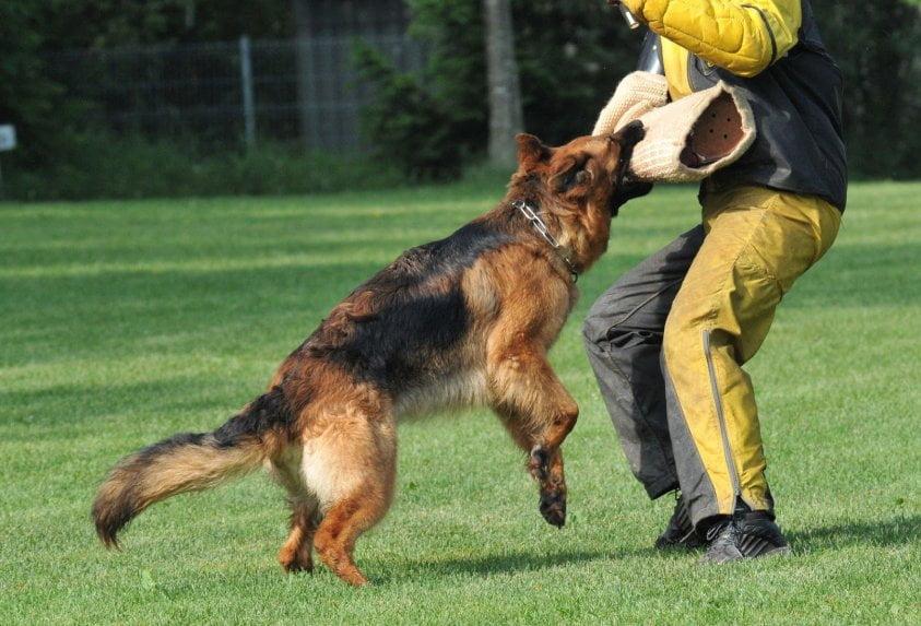 Perros atacan a sus dueñas