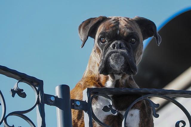 Las víctimas de violencia machista ya tienen perro guardián