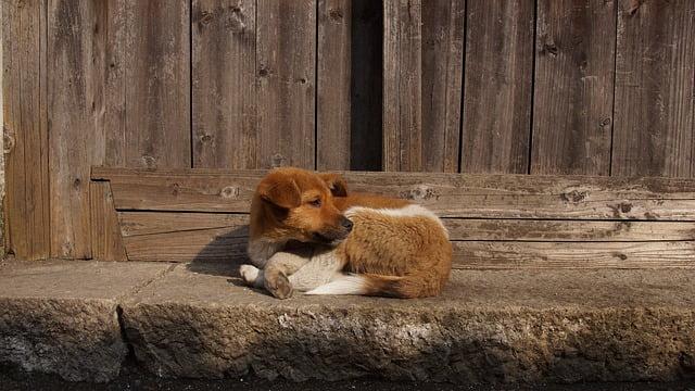 Perros abandonados en la calle… un suceso alarmante