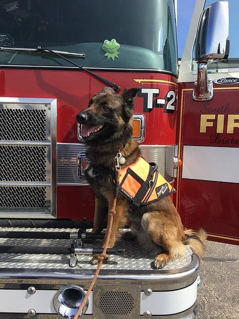 Perros bomberos… héroes de 4 patas