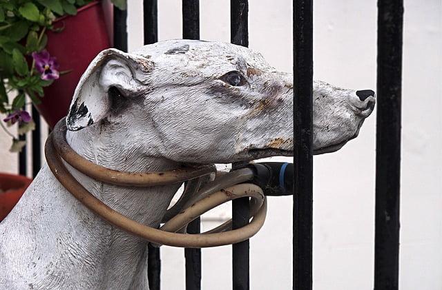 En burgos… robo de perros supera los 4000 €