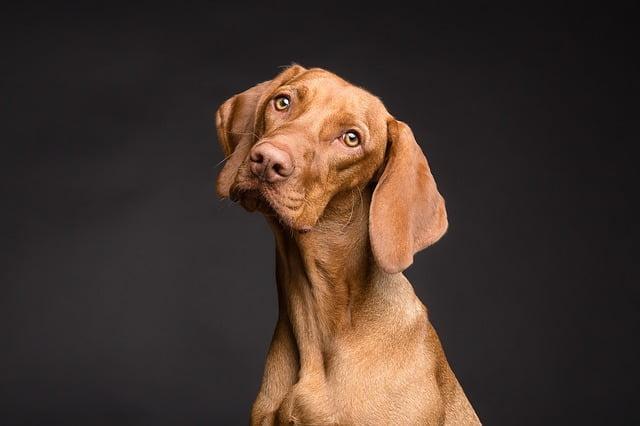 Cuide a su amigo con el mejor seguro de perros