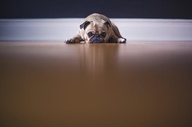 ¿Sufre su perro del Síndrome de Ansiedad por Separación?