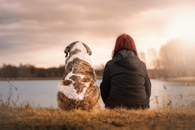 Los perros adoptados, fieles y agradecidos
