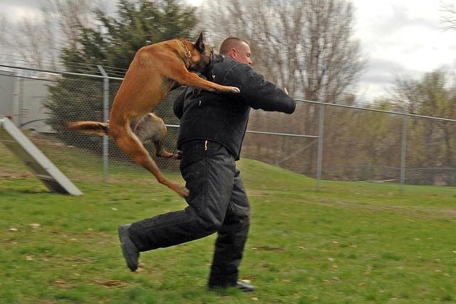 Disciplina para perros… puntos básicos