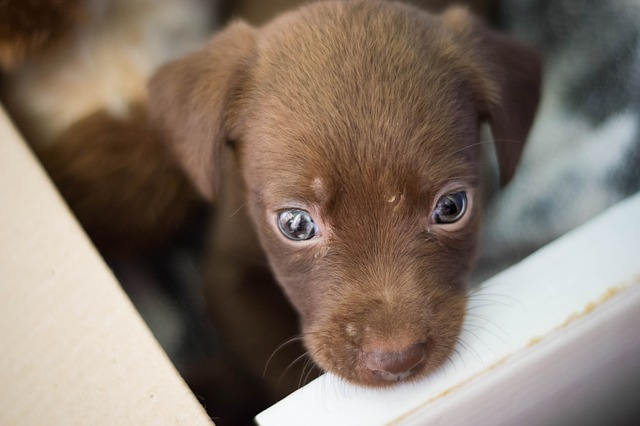 La adopción de perros en España es un contrato legal
