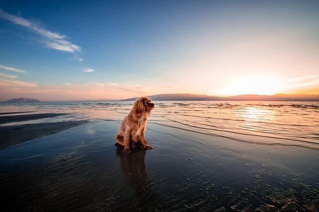 Playas para perros en vacaciones de verano 2019