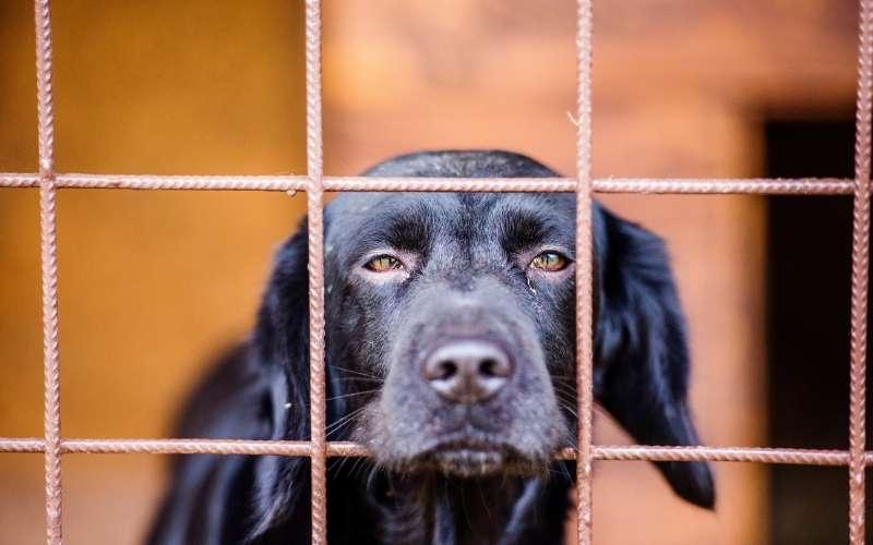 Hombre les cortó las cuerdas vocales a 34 perros