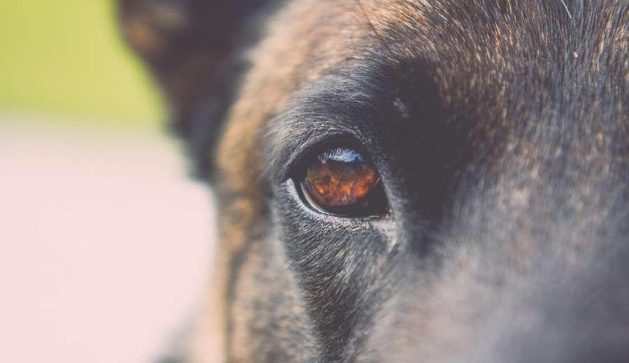 4 ciudades de España y el turismo Dog Friendly