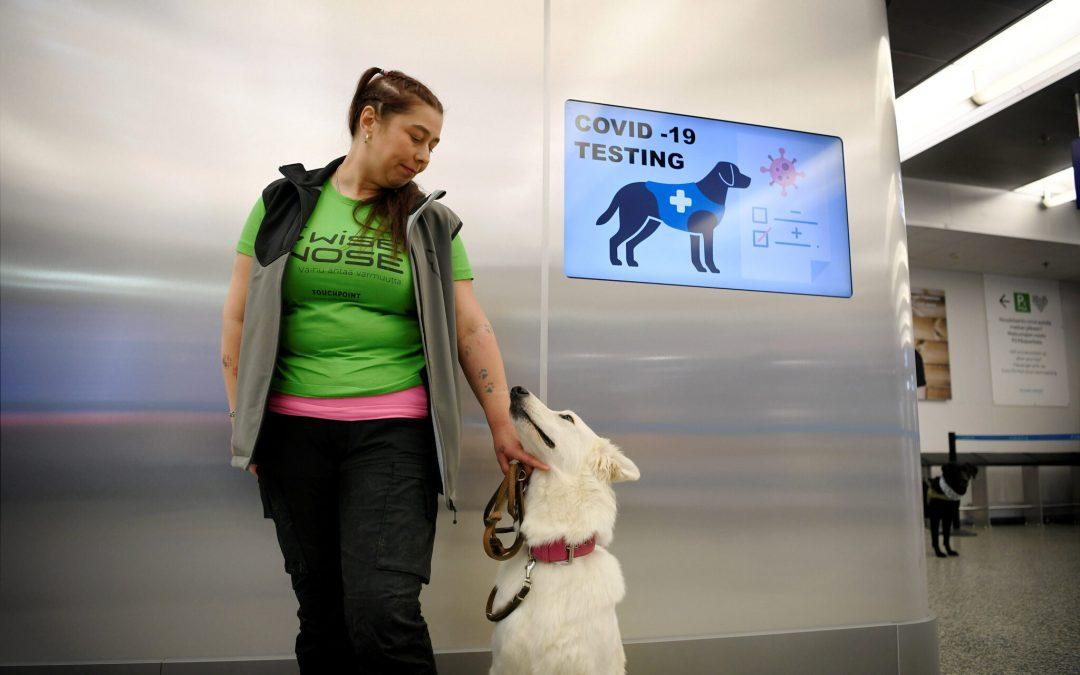 España utiliza perros para detectar Covid-19 en cribados masivos