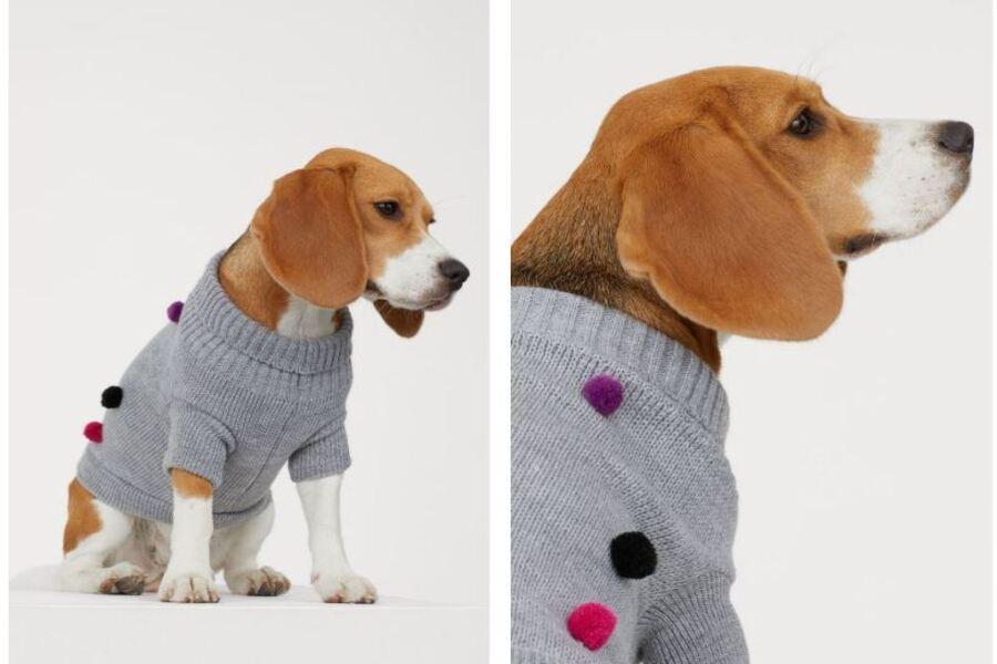 El boom de las colecciones caninas de la mano de Zara
